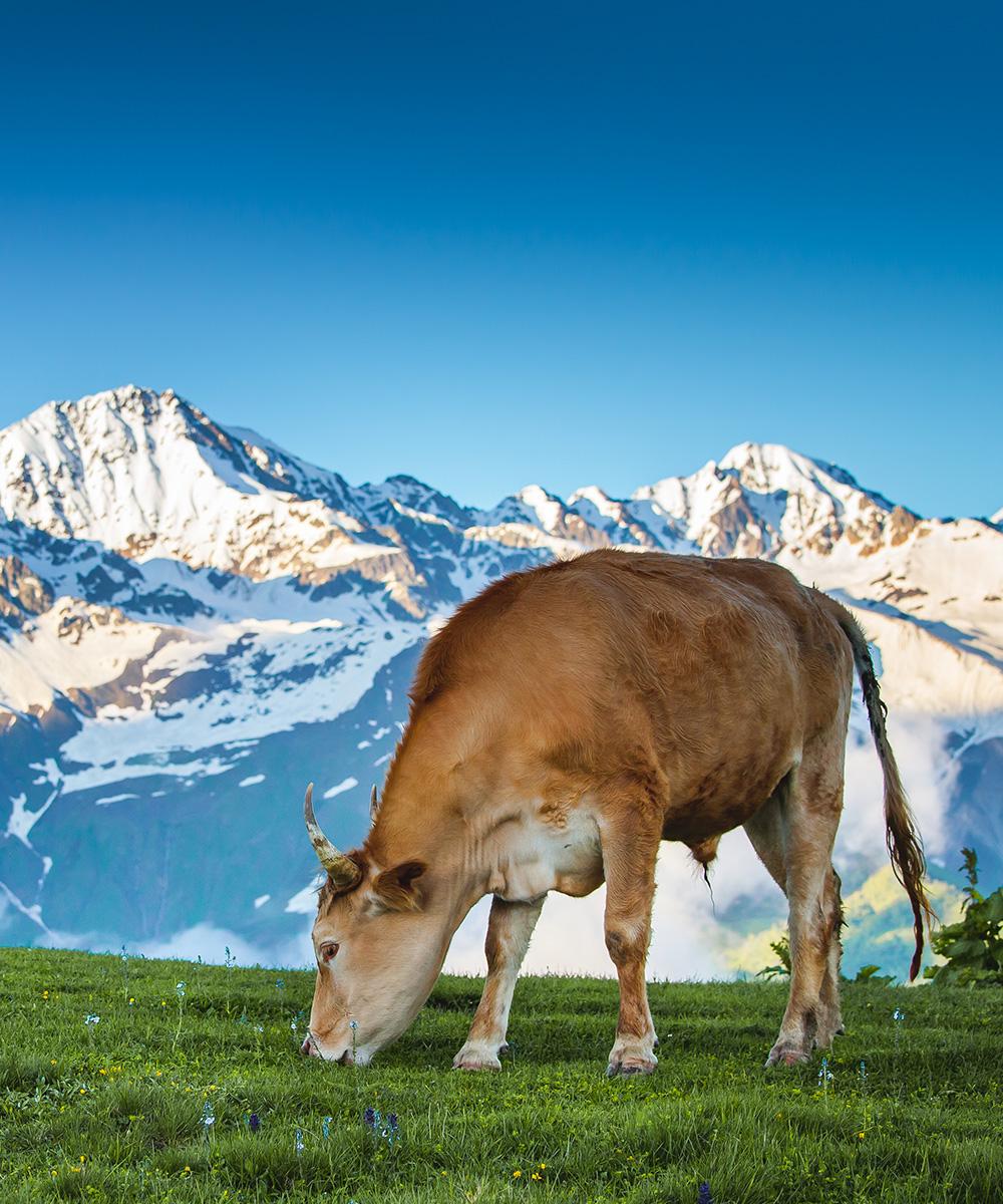 vendita carne bovina cuneo