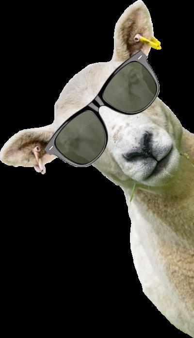 vendita carne ovina