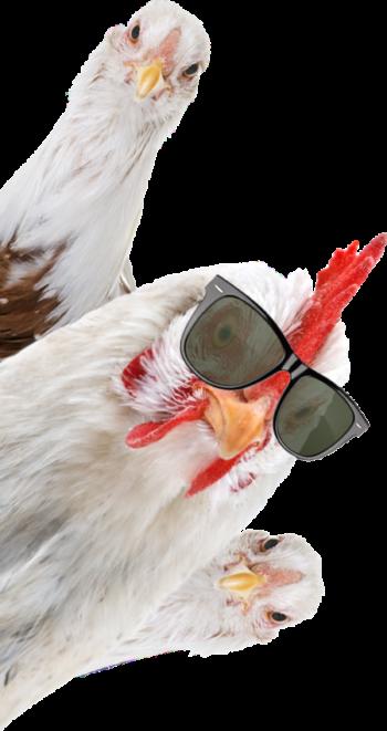 vendita carne avicola
