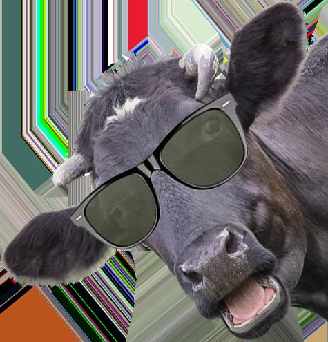 vendita carne bovina